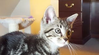 Alley To Attic Kittens Close-up Live Stream 7/31/17