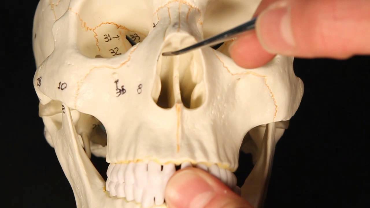 Anatomy of ethmoid bone