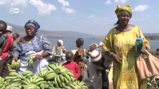 African Stories: Bananas from Guinea - more business, more affluence   Global 3000