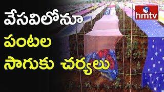టమోటా సాగు కోసం చీరలతో పందిళ్లు...! Farmer Innovative Experiment to Protect Crop In Summer | hmtv