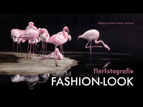 Kreative Tierfotografie: Fotos mit Fashion-Look