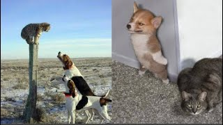 Funny Cats And Dogs - Funny Cats vs Dogs - Funny Animals Compilation _ Pet Animals Videos 😇 Funniest