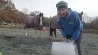 Bubble Wrap and Horses Spooky Bombproof Desensitization with Versace and Reveille Horse Training