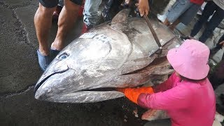 900 pounds Giant Bluefin Tuna cutting for Sashimi  Donggang fish market Taiwan