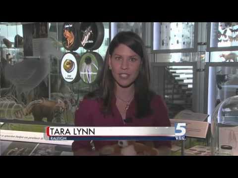 OLINGUITO--NEW SPECIES OF ANIMAL FOUND