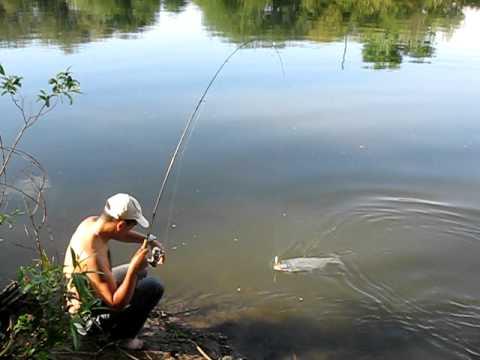 ловля риби на дністрі відео