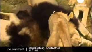 Ceva incredibil in Africa de Sud