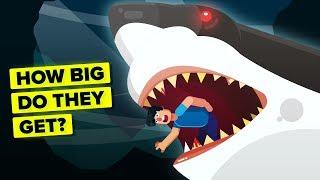 Largest Animals Size Comparison