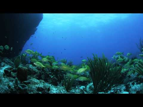 Schooling Fish in the Man of War Shoal Marine Protected Area/ Video by Mauricio Handler