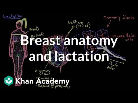 Breast Anatomy And Lactation video