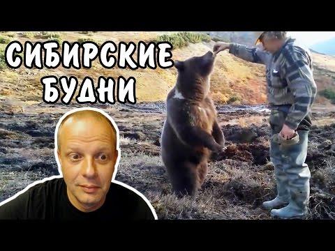 Сибирские будни - Мужики кормят медведя - Американский профессор