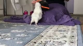 Woman Feeds Guinea Pigs Slices of Carrots - 986185-1