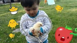 Kid Playing With Baby Chick - Animals For Children - Fun on Children's slide