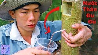 Thử Uống Nước Trong Thân Cây Đủ Đủ .Lấy Nước Trong Cây Đu Đủ .Primitive Technology: Papaya Juice