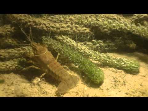 TheHorseDive ovvero un'immersione nottura del CSS  sul lago di Garda in localita' La Cavalla Garda. Video girato nel luglio 2012 da Gian Melchiori