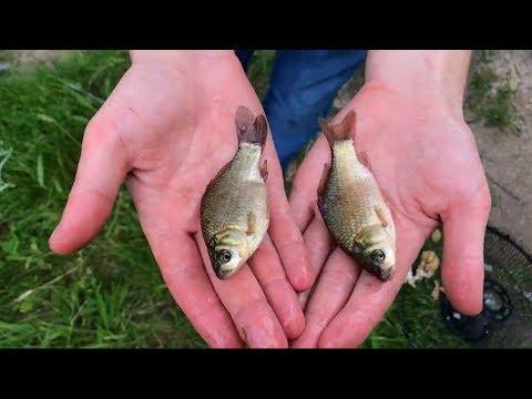 5 уловистых самодельных ловушек для рыбы/5 inventive DIY fish trap
