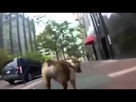 Прикольные собаки Самые смешные собаки В МИРЕ!!!! Смотри прикол!