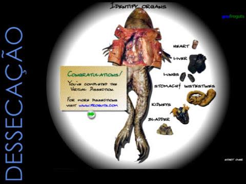 Biologia - Anfíbios