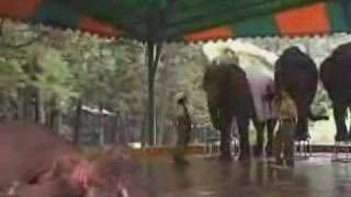 download lagu Elephant Show Part Ii gratis
