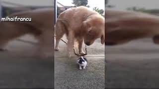 Funny Dogs Meeting Cute Baby Animals   Dog Funny Compilation 2019