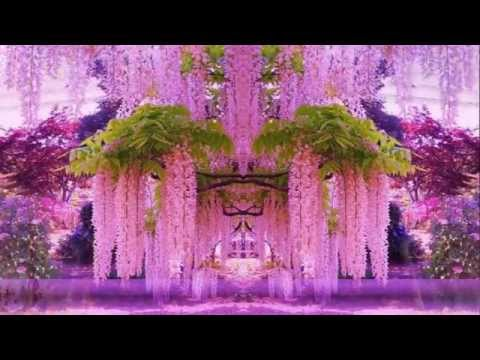 Magnificent Colors of Wisteria (HD1080p)