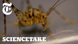 Crickets Can Jump 50x Their Body Length, Here
