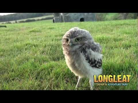 Keeper Cares for Baby Burrowing Owls at Longleat