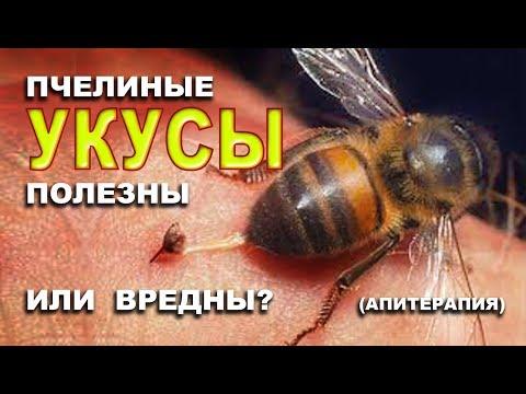 Польза укуса пчелы на потенцию