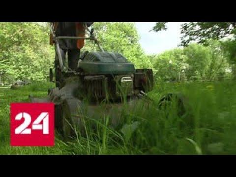 Косить или не косить: какой высоты должна быть трава у дома - Россия 24