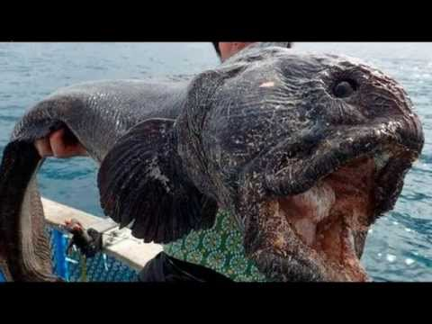 Monstrous Wolf-Fish Raises Fears About Fukushima Nuclear Disaster
