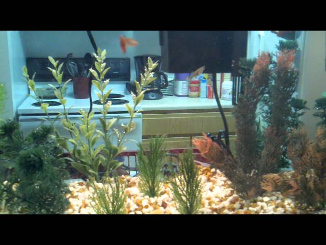 New guppy and birthing/fry tank set up