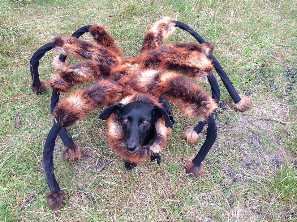 Giant Spider Eating Dog Mutant Giant Spider Dog sa Wardega