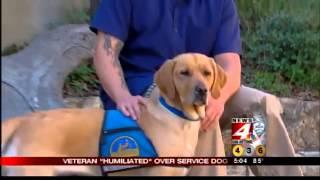 Veteran 'humiliated' over service dog