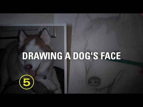 Draw a Dog's Face Accurately — A Drawing Critique