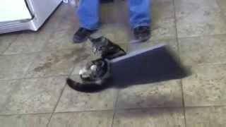 Mèo vui đùa cực CUTE