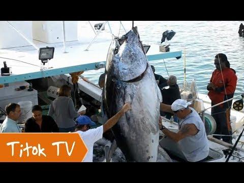 Câu toàn cá ngừ đại dương khổng lồ may mắn hơn cả mong đợi