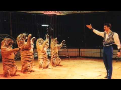 A Tiger For Malgudi video
