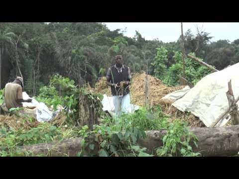 Liberia Vice President Farms
