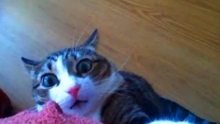 Talking Animals Funny Noises and Meowing Collection _ 2014 _ 720p _ HD