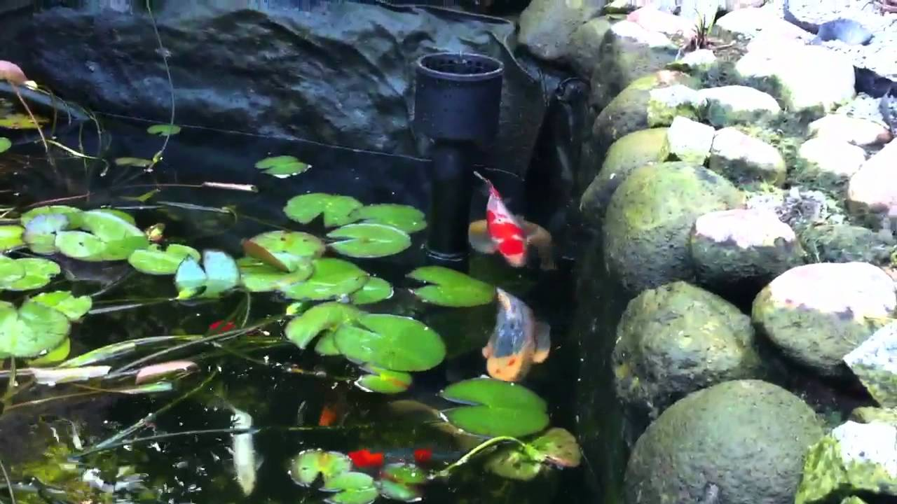 Changing water in koi pond youtube for Koi pond removal