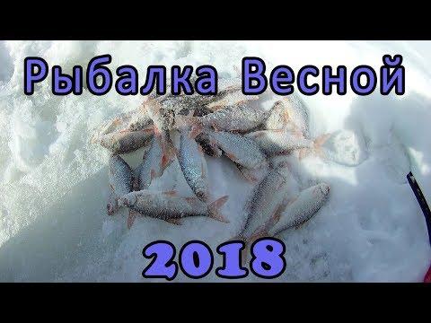 Хороший клёв плотвы на безмотылку. Рыбалка на льду Весной 2018