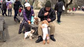 Doggy style! Pampered pooches in Japan!