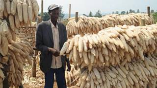 Emergency Meeting To Address Maize Scarcity
