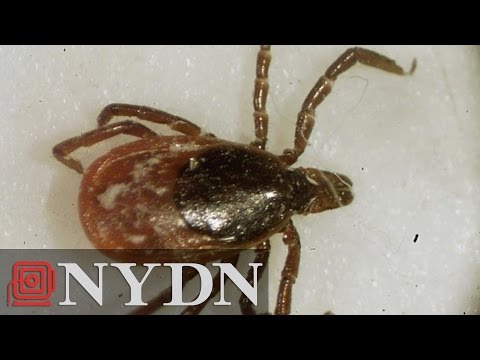 Uptick of Lyme Disease Attributed to Global Warming: Here's How to Fight Against it