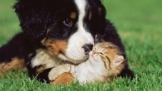 Videos De Risa - Animales - Gatos Y Perros Jugando [Nuevo]