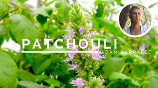 Patchouli - The Oil of Presence and Solitude