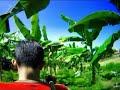 Geger,..!!! Menjadi Viral -  Video Mesum Siswi SMP di Kebun Pisang