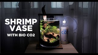EASY Shrimp Vase with bio CO2 - How I made it