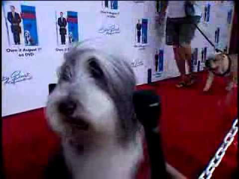 Shaggy Dog DVD Premiere Party