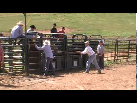 Rez Tuff Bucking Bulls Easter Bull Drop.MBV